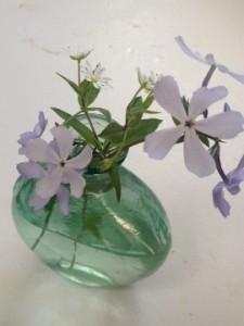 Blue Phlox (divaricata)